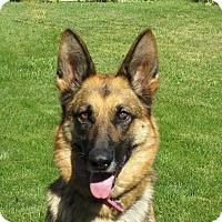 Adopt A Pet :: ILSA - Nampa, ID