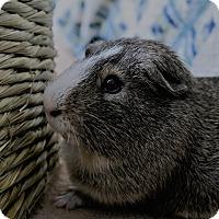 Adopt A Pet :: Darwin - Fullerton, CA