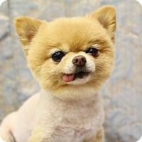 Adopt A Pet :: Suzie Q - Gulfport, MS