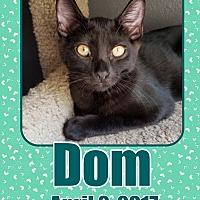 Adopt A Pet :: Dom - Orange, CA
