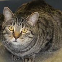 Adopt A Pet :: Edward - Quincy, IL