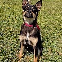 Adopt A Pet :: Yancy - Lisbon, OH