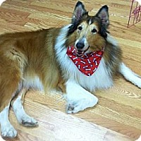 Adopt A Pet :: CHARLIE - Minneapolis, MN
