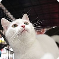 Adopt A Pet :: Jasmin - Santa Monica, CA