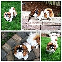 Adopt A Pet :: Polly Pocket - Richmond, VA