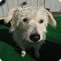 Adopt A Pet :: Harmony @ Petsmart Sat. - Atascadero, CA