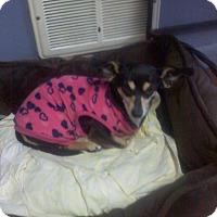 Adopt A Pet :: MANDY - Mahopac, NY