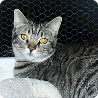 Adopt A Pet :: Benjie - Whiting, IN
