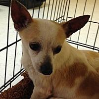 Adopt A Pet :: Jaden - Ardmore, OK