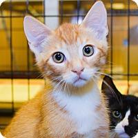 Adopt A Pet :: Harrison - Irvine, CA