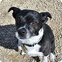 Adopt A Pet :: Lanie - Meridian, ID