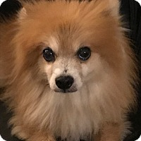 Adopt A Pet :: Teddy - Orlando, FL