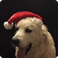 Adopt A Pet :: Moe *Adopted - Tulsa, OK