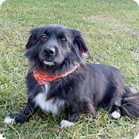 Adopt A Pet :: WeeWee - Mocksville, NC