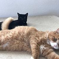Adopt A Pet :: Kovu & Maverick - Mission Viejo, CA