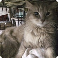 Adopt A Pet :: Bella - Cocoa, FL