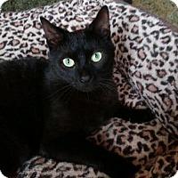 Adopt A Pet :: Madison - Furlong, PA