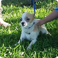 Adopt A Pet :: FROGGY - Houston, TX