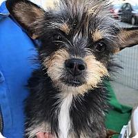 Adopt A Pet :: Dorie - San Francisco, CA