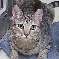 Adopt A Pet :: Eddie - Lago Vista, TX