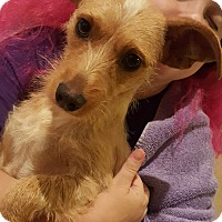 Adopt A Pet :: RILEY - Cranston, RI