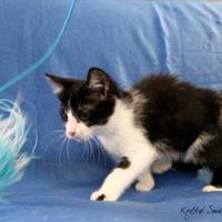 Adopt A Pet :: GERALDINE - Bucyrus, OH