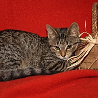 Adopt A Pet :: Chickadee - Marietta, OH