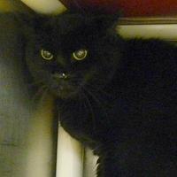 Adopt A Pet :: Max - West Kennebunk, ME