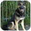 Photo 4 - German Shepherd Dog Mix Dog for adoption in Los Angeles, California - Zack von Zelinger