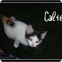 Adopt A Pet :: Callie - Mobile, AL