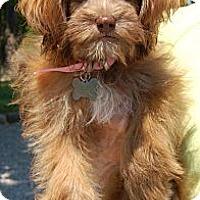 Adopt A Pet :: Ashley - Staunton, VA