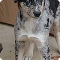 Adopt A Pet :: Shiloh - Clinton, LA
