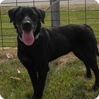 Adopt A Pet :: Molly - Loveland, CO