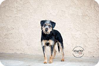 Terrier (Unknown Type, Medium) Mix Dog for adoption in Newport Beach, California - Emmitt