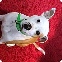 Adopt A Pet :: RHETT-POTENTIAL EMOTIONAL SUPPORT ANIMAL - DeLand, FL
