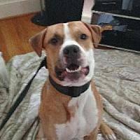 Adopt A Pet :: Buddy - Avon, NY
