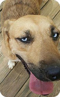 Husky Mix Dog for adoption in Baileyton, Alabama - Abby