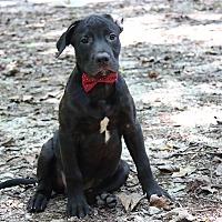 Adopt A Pet :: Masaharu Morimoto - Raleigh, NC