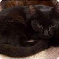 Adopt A Pet :: Minnie - El Cajon, CA