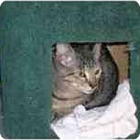 Adopt A Pet :: Brownie - Grand Rapids, MI