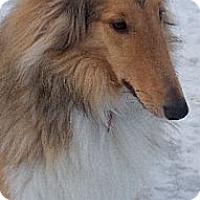 Adopt A Pet :: Shadow - Minneapolis, MN