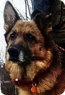 German Shepherd Dog Dog for adoption in Augusta, Maine - Emma