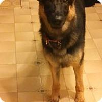 Adopt A Pet :: BILLIE - Tully, NY