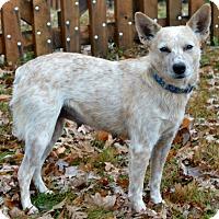 Adopt A Pet :: Dot - Delano, MN