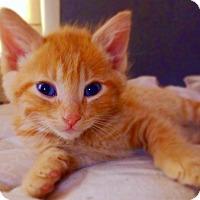 Adopt A Pet :: Adric - St. Louis, MO