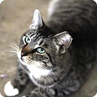 Adopt A Pet :: Spurs - Denton, TX