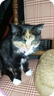 Calico Kitten for adoption in Bay City, Michigan - Millie