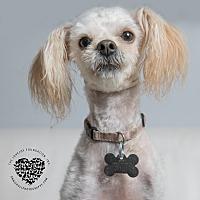 Adopt A Pet :: Uki - Inglewood, CA
