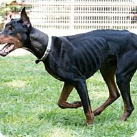 Adopt A Pet :: AXTYN - Greensboro, NC
