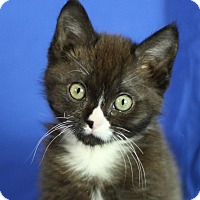 Adopt A Pet :: Blake - Winston-Salem, NC